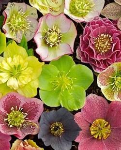lawrence county garden mart - Garden