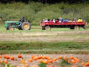hayride and pumpkins for cheeseman farm