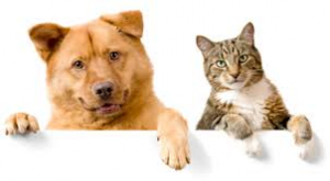 cat and dog for fundraiser