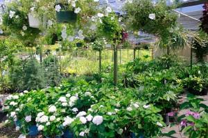garden mart